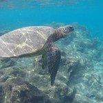 Foto de The Ocean Project On Maui