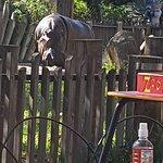 阿德萊德動物園照片