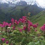Foto de Nepal Gateway Trekking