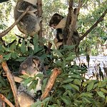 Foto Currumbin Wildlife Sanctuary