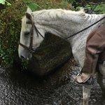 Foto de Saddle Tramps Trail Riding