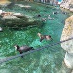 Photo of Tiergarten Schoenbrunn - Zoo Vienna