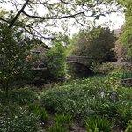 Area behind Tea Garden