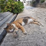 Cat sleeping near Suleyman's mausoleum