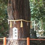 御神木→ 樹齢約1000年と云われる夫婦杉