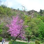 Bild från National Botanical Garden of Georgia