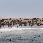 Zdjęcie Sandwich Harbour 4x4