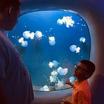 We really enjoyed the aquarium! Our 6 year old loved it and we were there in the evening, prices