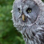 Coda Falconry photography session on 13th August 2018