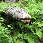 Bilde fra Coastal Maine Botanical Gardens