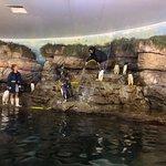 Foto de Oceanogràfic