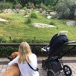 Foto di Opel Zoo