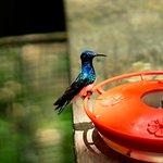 Foto di Panama Rainforest Discovery Center
