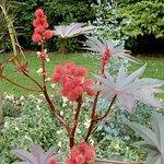 Billede af Borough Gardens