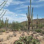 Photo of Saguaro National Park