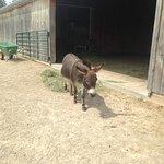 ภาพถ่ายของ Donkey Sanctuary of Canada