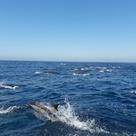 One of the dolphin pods we saw on our trip with Nick