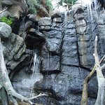 Waterfall at the entrance of the Aquarium!