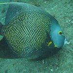 Photo of Nautilus Dive Center