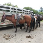 horses by trailer