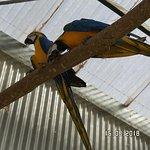Macaws at Bird World