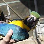 Macaw at Bird World