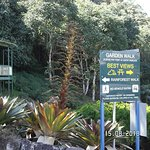 Flowering Bromeliad at Maleny Botanic Gardens