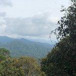 ภาพถ่ายของ Pine Tree Trail