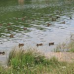 lac de la cavayère