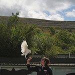 Billede af Burren Birds of Prey Centre