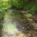 Bilde fra Scherbakovsky Nature Park
