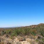 Desert in june