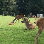 صورة فوتوغرافية لـ Mount Panther Farm Park