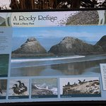 Heceta Head Lighthouse Trail sign - Rocky Refuge for birds!