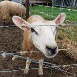 Foto Mini Meadows Farm