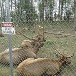 Gaylord's City Elk Park resmi