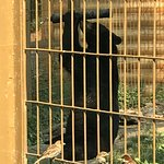Photo of The Calgary Zoo