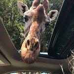 Bild från Fossil Rim Wildlife Center