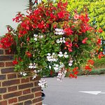 Lovely Hanging Basket at the corner of the building.