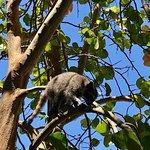 Foto de Cahuita National Park