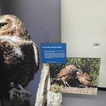 صورة فوتوغرافية لـ Saskatchewan Burrowing Owl Interpretive Centre