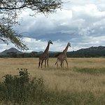 Tarangire park Tanzania