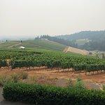 Winderlea Vineyard and Winery의 사진