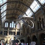 Photo of Natural History Museum