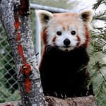 塔斯马尼亚动物园照片