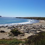 Photo of Elephant Seal Rookery