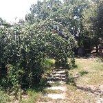 Photo of Azienda Agricola Abbafritta