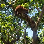 Photo de Parc des Mamelles, le Zoo de Guadeloupe