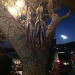 Foto de The Octopus Tree