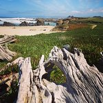 Foto de Fort Bragg Coastal Trail